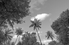 Monochrome infrared image of trees and sky Stock Images