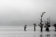 Monochrome landscape on Reelfoot Lake Stock Photos