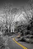 Monochrome landscape view of curvy road in selective color Royalty Free Stock Images