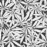 Monochrome pattern marijuana Stock Image