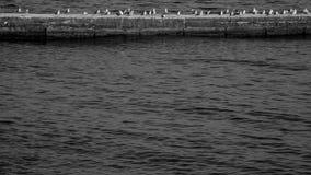 Monochrome photo of seagull on the pier Stock Photos