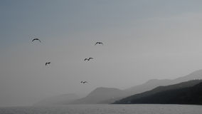 Monochrome photo of seagulls in the sky Royalty Free Stock Photo