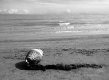 Monochrome photography of the Italian coast with seashells and algae royalty free stock photography