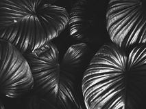 Monochrome Photography of Leaves Stock Photography