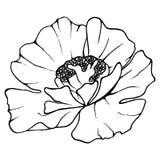 Monochrome poppy flower plant line art vector Stock Image