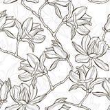 Monochrome  seamless  background with magnolia. Stock Image