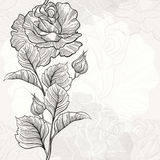 Monochrome seamless  background with roses. Royalty Free Stock Images