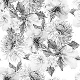 Monochrome seamless pattern with flowers. hrysanthemum. Mallow. Rose. Watercolor illustration. royalty free stock photos