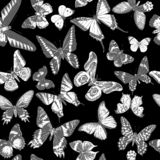 Monochrome seamless pattern with hand drawn butterflies royalty free stock photo