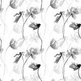 Monochrome seamless pattern with Poppies flowers Royalty Free Stock Photography
