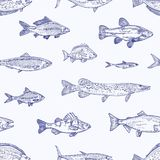Monochrome seamless pattern with various types of fish hand drawn with contour lines on light background. Backdrop with stock illustration