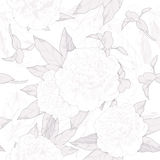 Monochrome seamless pattern white  peonies and buds on a white background.vector illustration Stock Image