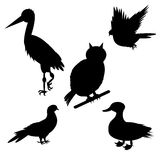 Monochrome silhouettes of different species of birds Stock Photography
