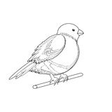 A monochrome sketch of a bird (bullfinch) Stock Photography