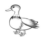 A monochrome sketch of a duck Stock Photos