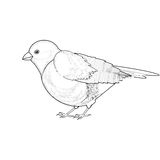 A monochrome sketch of titmouse Royalty Free Stock Image