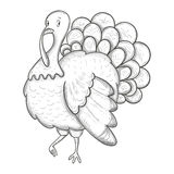 Monochrome sketch turkey Royalty Free Stock Photo