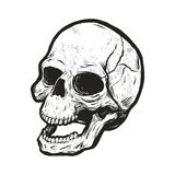 Monochrome skull with grunge texture. Vector clip art isolated on white background Stock Photos