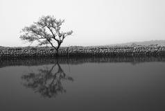 Monochrome solitude Royalty Free Stock Image