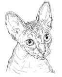 Monochrome Sphynx Сat. Vector outline monochrome portrait of hairless curious Sphynx Сat in black color. Hand drawing Illustration isolated on white background Stock Photos