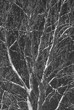 Monochrome tree branches. Against sky Royalty Free Stock Photos