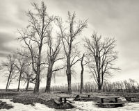 Monochrome Tree Grove in Winter stock images