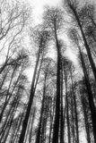 Monochrome trees Stock Images