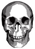 Monochrome vector graphics - human skull Royalty Free Stock Images