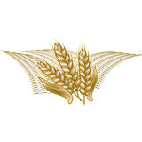 Monochrome vintage engraving illustration of ripe wheat. Farmers market badge with ripe wheat, cereals. Monochrome vintage engraving fresh organic bread, ear Royalty Free Stock Photography