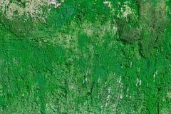 Monocolor green painted flat concrete surface closeup texture.  stock images