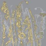 Monocromatico erbe del disegno a tratteggio royalty illustrazione gratis