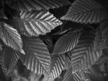 Monocromo del crecimiento de la primavera Foto de archivo