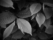 Monocromo del crecimiento de la primavera Imagenes de archivo