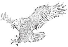 Monocromo del drenaje de la mano de la redada del águila calva en el vector blanco del fondo Fotos de archivo libres de regalías