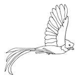 Monocromo del pájaro de quetzal Fotos de archivo libres de regalías