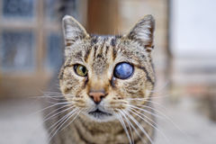 Monocular cat with universe in eye  Royalty Free Stock Images