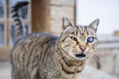 Monocular cat with universe in eye 7 Stock Photography