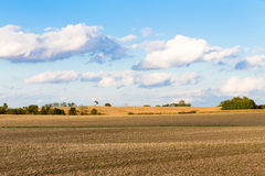 Monoculture Corn Fields of Indiana Royalty Free Stock Photography
