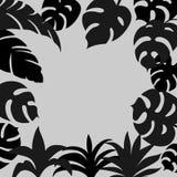 Monokrom bakgrund med hand-drog tropiska sidakonturer Royaltyfria Bilder