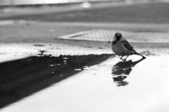 Monokrom fågel royaltyfria foton