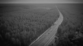 Monokrom flyg- sikt av järnvägsspår i en skog royaltyfri bild