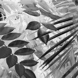 Monokrom lövverk Arkivbild