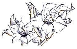 Monokrom linje konst för sammansättning för parblommaalstroemeria Royaltyfria Foton
