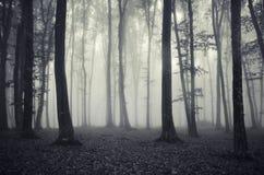 Monokrom skog med mystisk dimma Royaltyfria Bilder