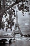 Monokrom tappningsikt av Eiffeltorn som inramas med trädet, Paris royaltyfria bilder