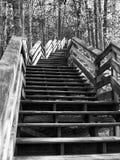 Monokrom trätrappa, i skogsmarkinställning Arkivfoton