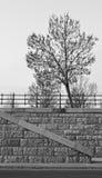 monokrom tree Arkivbild