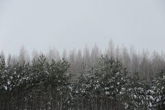 monokrom vinter för liggande Träd i snön, mulen himmel Arkivfoto
