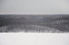 monokrom vinter för liggande Träd i snön, mulen himmel Royaltyfri Fotografi