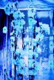 Monokromblommor som frysas in i den genomskinliga isasken Royaltyfri Fotografi